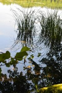 Balade des Quatre Lacs